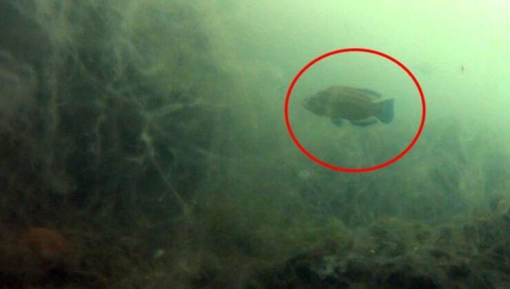 Müsilajın deniz altındaki tahribatı görüntülendi! Marmara'nın altı üstünden daha fena