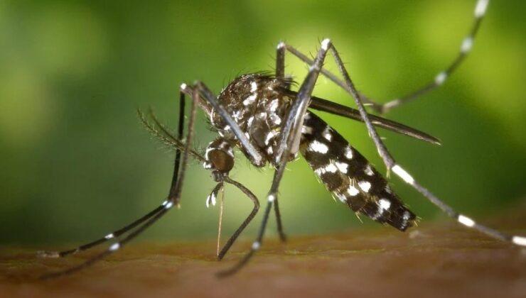 Batı Nil Virüsü nedir? Batı Nil Virüsü nerelerde görüldü?
