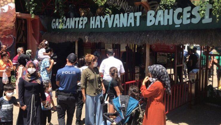 Gaziantep'te panik! Kafesini parçalayarak kaçan aslan önüne gelene saldırdı: 3 yaralı