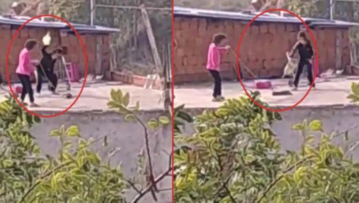 Görüntüler, izleyenleri dehşete düşürdü! Kediye eziyet iddiasına soruşturma başlatıldı
