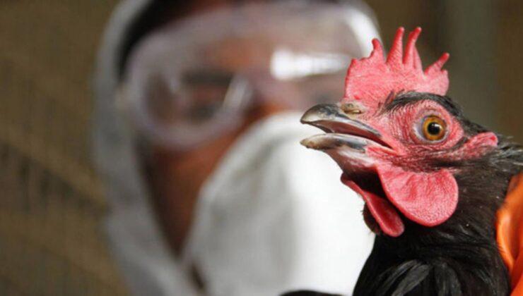 Görüntüler Türkiye'den! Korona ile mücadele sürerken kuş gribi patlak verdi, onlarca hayvan toplandı