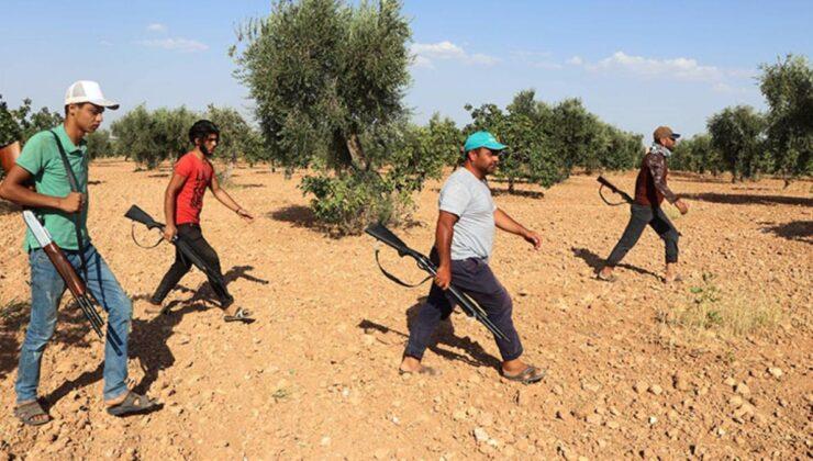 Güneydoğu'da Antep fıstığı hasadı başladı! Bekçiler hırsızlara karşı ellerinde tüfeklerle 24 saat nöbette