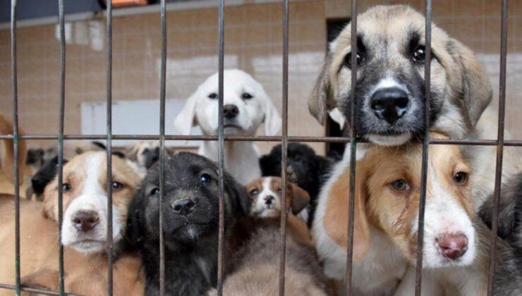 Hayvanları Koruma Kanunu teklifi Meclis'e sunuldu! Eşya olmaktan çıkarılıp, canlı statüsüne getirilecekler