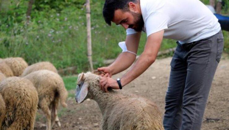 Köyüne dönen 25 yaşındaki genç, 'Genç Çiftçi' projesiyle 3 yılda 250 bin lira kazandı