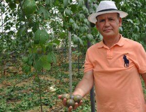 Passiflora meyvesini yetiştirmek için Almanya'dan Türkiye'ye geldi, ilk hasadının kilosunu 75 liradan satıyor