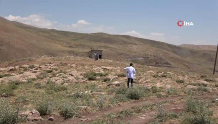Sağlık çalışanları dağ tepe demeden berivanları, çobanları ve çiftçileri aşılıyor