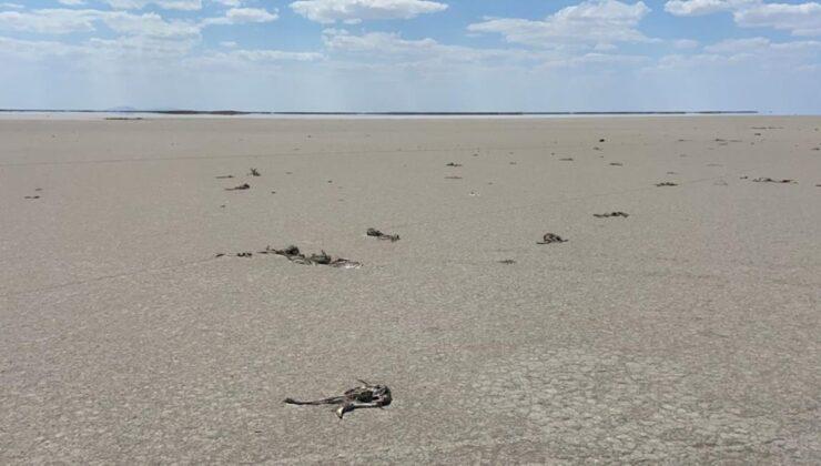 Son Dakika: Bakan Pakdemirli'den Tuz Gölü'nde ölen flamingolarla ilgili açıklama: Hazırlanan ilk rapora göre herhangi bir zehirlenme yok