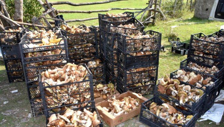 Sinop ormanlarından fışkıran mantarlar köylünün gelir kaynağı oldu! Günlük 600 lira kazanan var
