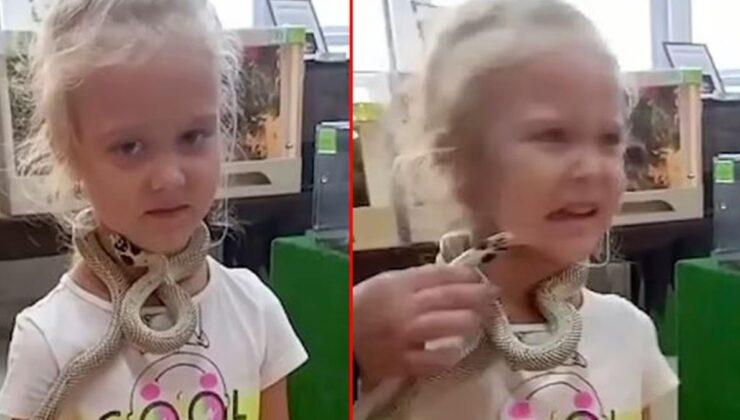 Önce her şey sakindi! Bir anda sinirlenen yılan küçük kızın suratını ısırdı