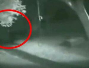 Dünyanın konuştuğu video! Ormanda görünen kurt adam, kendisini çeken kameraya saldırdı