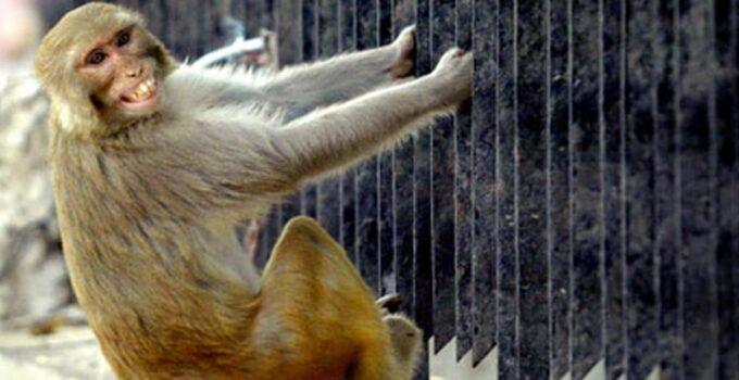 Katil maymun! Sokakta gözüne kestirdiği adamı kafasına tuğla atarak öldürdü